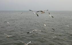 Gaviotas que vuelan sobre el río Fotos de archivo libres de regalías