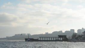 Gaviotas que vuelan sobre la playa almacen de metraje de vídeo
