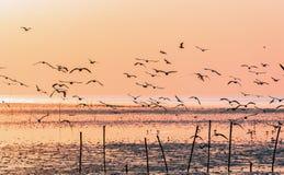 Gaviotas que vuelan sobre superficie del mar en la salida del sol imagen de archivo