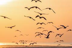Gaviotas que vuelan sobre superficie del mar en la salida del sol imagenes de archivo