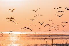 Gaviotas que vuelan sobre superficie del mar en la salida del sol foto de archivo libre de regalías
