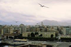 Gaviotas que vuelan y opinión de Palermo, Italia fotos de archivo