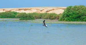 Gaviotas que vuelan y que pescan por el lado de mar con el fondo del océano y del cielo azul Fotografía de archivo