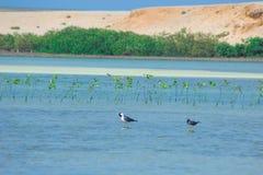 Gaviotas que vuelan y que pescan por el lado de mar con el fondo del océano y del cielo azul Imagen de archivo libre de regalías