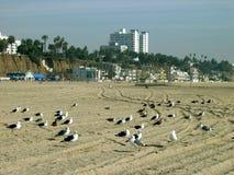 Gaviotas, Santa Monica Beach, California, los E.E.U.U. imagenes de archivo
