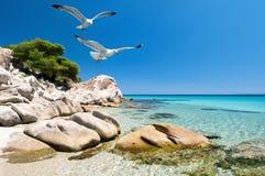 Gaviotas sobre orilla de mar fotografía de archivo
