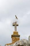 Gaviotas sobre y alrededor de una cruz de piedra Imagen de archivo libre de regalías