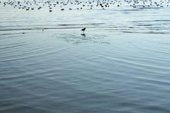 Gaviotas y el mar Fotografía de archivo libre de regalías