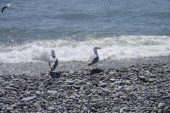 Gaviotas y el mar Imagenes de archivo