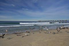 Gaviotas y embarcadero en la playa de Hermosa Imagenes de archivo