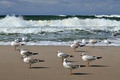 Gaviotas y mar Báltico de la tormenta Imagen de archivo