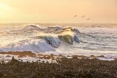 Gaviotas y ondas negras del Océano Pacífico en una playa de Arica Chile foto de archivo