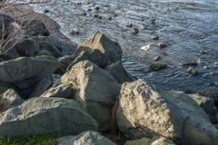Gaviotas y rocas Imágenes de archivo libres de regalías