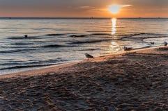 Gaviotas y salida del sol hermosa en la orilla de mar polaca Foto de archivo libre de regalías