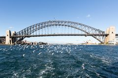 Gaviotas y Sydney Harbour Bridge fotografía de archivo