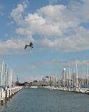 Gaviotas y veleros Foto de archivo libre de regalías