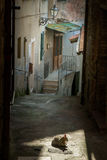 Gavorrano, Grosseto - Italy. Gavorrano province of Grosseto - Italy, medieval streets with arches and cats in the sun, stone houses and antique street lamps Stock Images