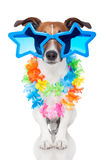 Gay dog. With glasses and lei Royalty Free Stock Image