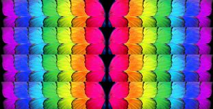 Gay flag. Colors of rainbow. Pattern of multicolored butterflies morpho,. Texture background royalty free stock photography