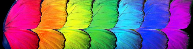 Gay flag. Colors of rainbow. Pattern of multicolored butterflies morpho,. Texture background stock images