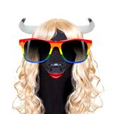 Gay pride cow. As drag queen standing for  social equality, for csd, christopher street day or  homosexual parade Stock Image