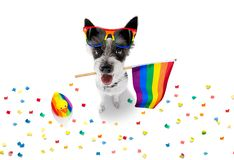 Gay pride dog. Crazy funny gay homosexual  poodle terrier dog proud of human rights ,sitting and waiting, with rainbow flag tie  and sunglasses , cheers with royalty free stock photo