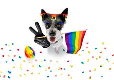 Gay pride dog stock photography