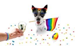 Gay pride dog royalty free stock photo