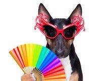 Gay pride dog stock image