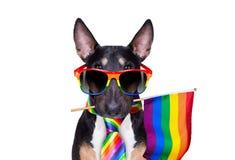 Gay pride dog royalty free stock photography