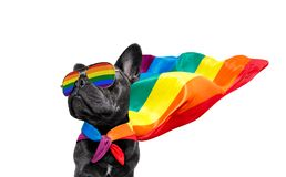 Gay pride dog stock images