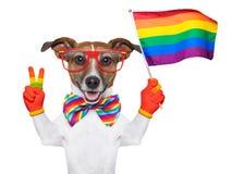 Gay pride dog. Waving a rainbow flag Royalty Free Stock Photos