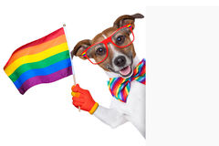 Gay pride dog Royalty Free Stock Photography