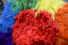 Gay Pride Rainbow Feathers Close-Up Fotografie Stock