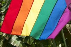 Gay Pride Rainbow Flag Palm Trees royalty free stock photo