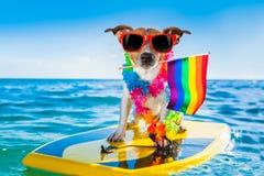 Gay pride surfer dog  at the ocean