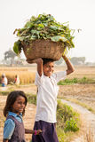 Gaya, India, 25 Listopad: Zdjęcie Stock
