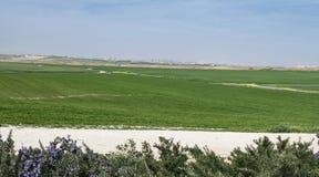 Gaza stad från den västra Negeven i Israel arkivfoto