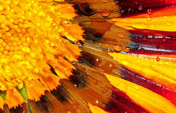 gazania λουλουδιών Στοκ εικόνες με δικαίωμα ελεύθερης χρήσης