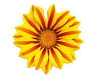 Gazania Royalty Free Stock Photography