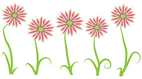 Gazania flower Royalty Free Stock Photography