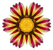 Gazania flower mandala Royalty Free Stock Photo