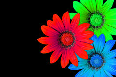 Gazania flowers, RGB Stock Photos