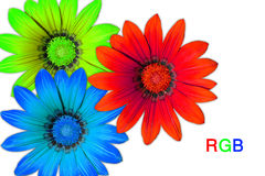 Gazania flowers, RGB royalty free stock photos