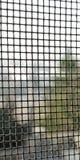 Gaze mit Sonnenschein lizenzfreie stockbilder