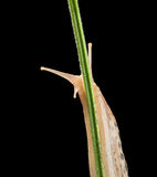 Gaze of slug Stock Image