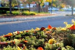Gaze, ville, automne Photos libres de droits