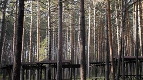 Gazebo στο δάσος πεύκων απόθεμα βίντεο