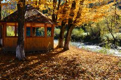 Gazebo in autumn Carpathian mountain beech sunny park on  river. Open air gazebo in autumn Carpathian mountain yellow beech tree sunny park on White Tysa river Royalty Free Stock Photos