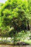 Gazebo bland de gröna träden Arkivfoto